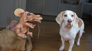 dogs-vs-mutant-mouse-funny-dogs-maymo-potpie-penny