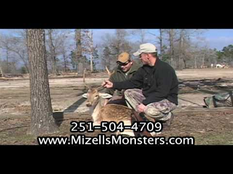Exotic Fallow Deer Buck Hunting In The Florida Panhandle With South Coast Safaris