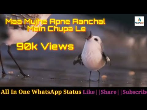 Maa Mujhe Apne Aanchal Mein Chupa Le   New WhatsApp Status Video   Thanks My All Lovely Subscriber's