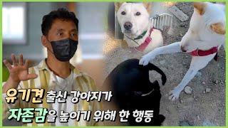 [ENG Sub] 유기견 출신 강아지가 자존감을 높이기 위해 한 행동 [이삭TV]