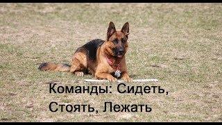 Дрессировка собаки: Команды сидеть, стоять лежать