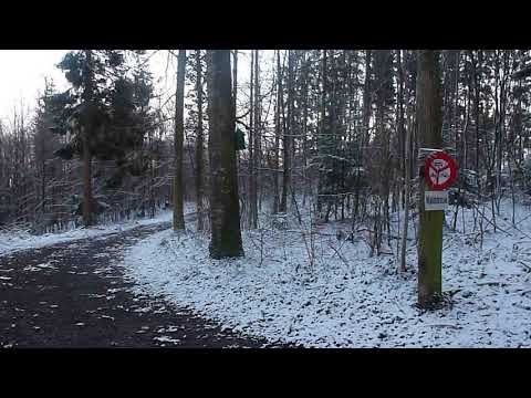 Chirping birds in a Switzerland forest, early morning 2nd location, winter February 2020