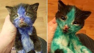 Verwahrloste Kätzchen, die mit Edding beschmiert wurden, erhalten ihr erstes Bad