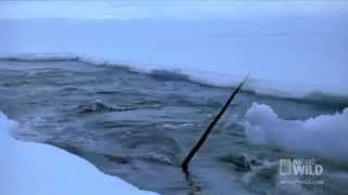 NARWHALS ARE REAL! - Documentary Film - Kickstarter Project Video