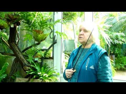 Ботанический сад Санкт-Петербурга. Тропики.Фрагменты экскурсии 11 сентября 2016 года.