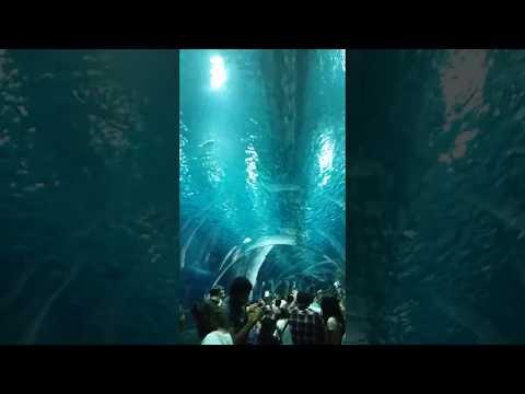 Vídeo Aqua Rio (Rio de Janeiro) muito legal!!