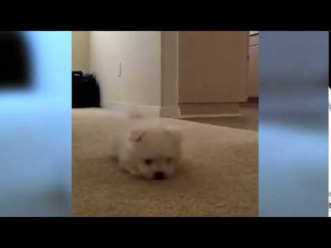 Ninja Dog / Ninja perro