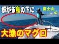 富士山の見えるポイントで大漁のマグロチャンス!