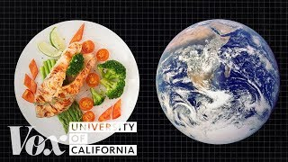 The diet that helps fight climate change Free HD Video