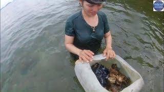 Lặn bắt hải sản gặp ngay cao thủ bắt đầy thùng sò tộ/seafood vietnam