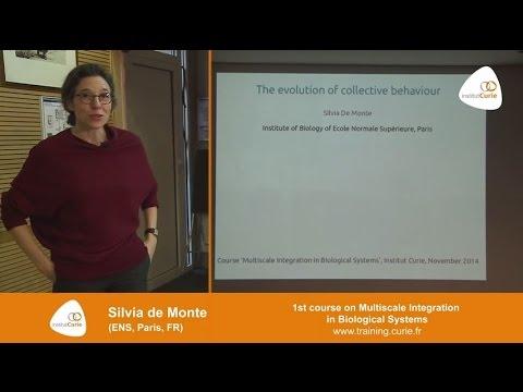 "Silvia de Monte : ""Evolution of collective behaviors"""
