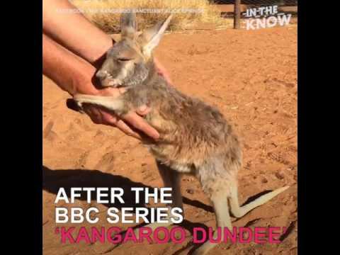 Inside Australia's baby kangaroo sanctuary