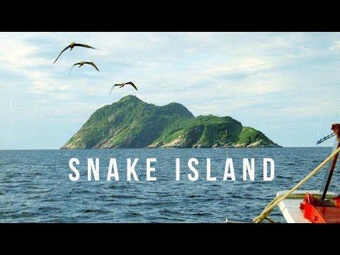 Snake Island   100 Wonders   Atlas Obscura