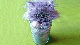 35 Котов, Которые Доказали, Что Они Жидкие