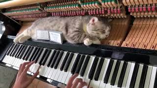 Cat Sleeps Comfortably Over Piano as Owner Plays a Lively Tune - 1034223-1