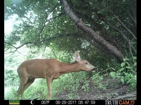 PRIMOS Truth Cam 35 - Trail Camera Pics - Part 1