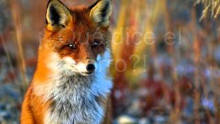 ♥The fox ~ Ylvis ~ (Letra en español)♥