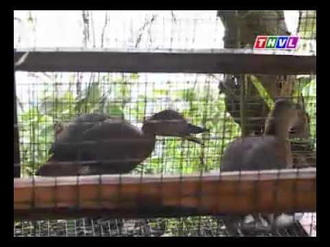 Về Miệt Thứ - Kỳ thú rừng U Minh Thượng -Nhipsonganminh.info