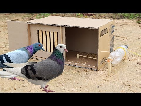 Building Fantastic Bird Trap Make from water bottle N Cardboard