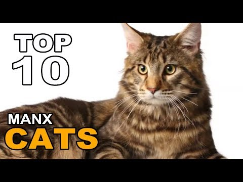 TOP 10 MANX CATS BREEDS