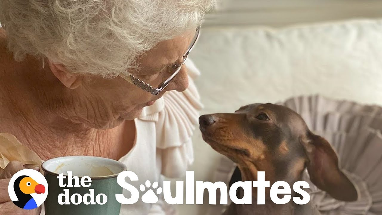 84-Year-Old Lady Is Best Friends With This Pup | The Dodo Soulmates
