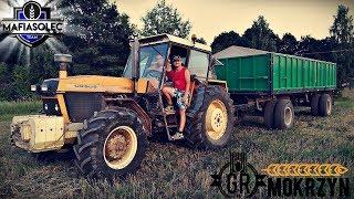 Transport zboża z pola na silosy - Ursus 1614  WakacyjnyVLOG #6 z MafiaSolecTeam :D