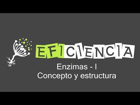 ENZIMAS. CONCEPTO Y ESTRUCTURA. Biocatalizador Centro activo