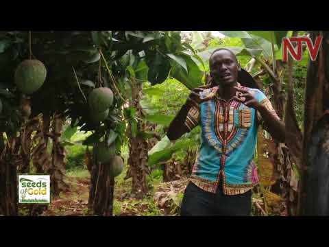 SEEDS OF GOLD: Jacob Kazindula put his degree aside to start a farm | 2018
