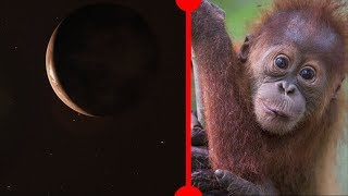 Close New Exoplanet and Monkey Mystery Solved - 7 Days of Science