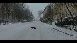 Жил да был чёрный кот за углом. Чёрный котяра переходит дорогу.