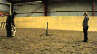 Clicker Training Obedience Jump