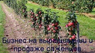 видео Питомник растений как бизнес