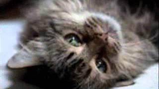 Детские песни .Кошка беспородная.wmv