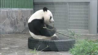 2018年7月21日夏休みだよパンダのお食事タイム thumbnail
