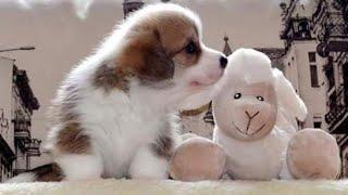 Обрезка когтей у щенка. Физиология, техника и психология обрезки)))