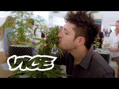 México Listo Para La Legalización De La Marihuana