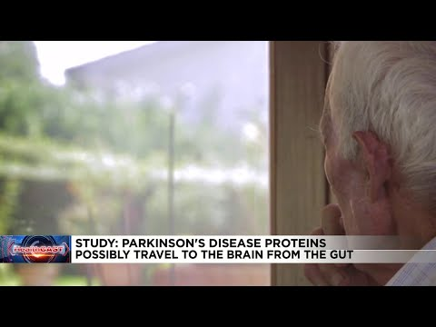 Parkinson's disease may start in the gut, new animal study shows
