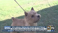 15th annual Fiesta Dog show in Scottsdale