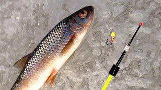 Рыбалка на безмотылку и три вида рыб