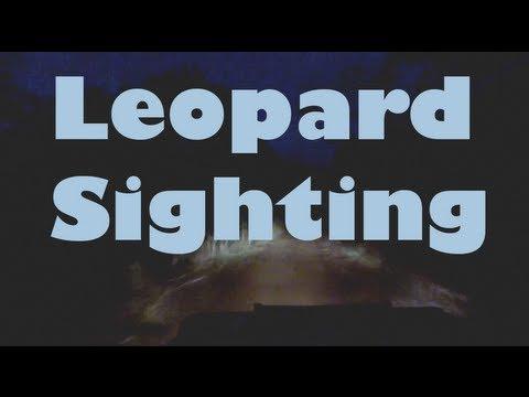 Nyika National Park: Leopard Sighting - Malawi, Africa