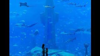 هل تخيلت أن تعيش تحت الماء ؟ فندق أتلانتس دبي | استفيد