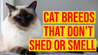10 Cat Breeds That Don't Shed Or Smell/ All Cats