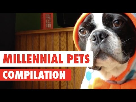 Millennial Pets || Funny Pet Compilation