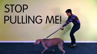 Polite Leash Walking Class - Teach Dog To Stop Pulling On Leash