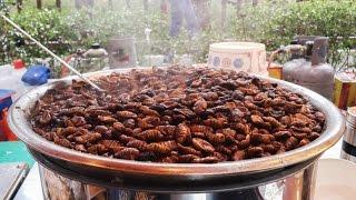 Eating Beondegi /  Silk Worm Pupae (번데기) in Korea