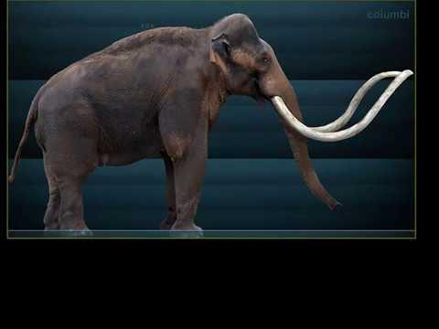 Late Pleistocene Megafaunal Extinctions
