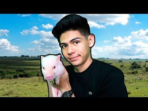 """¡ADOPTÉ a un MINI PIG, se llama """"PuerKix""""! - [ANTRAX] ☣"""