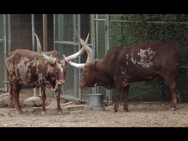 Visiting Animals in Denver Zoo, Zoo in Denver, Colorado, United States