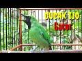 Cucak Ijo Gacor Bongkar Isian Mewah Cucak Ijo Gacor Full Isian  Mp3 - Mp4 Download