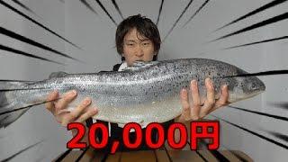 【サーモン、鮭の捌き方】サーモン1本丸ごと使った丼作るよ!